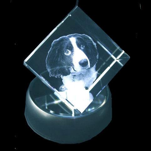 3D Pet Cube 50x50x50