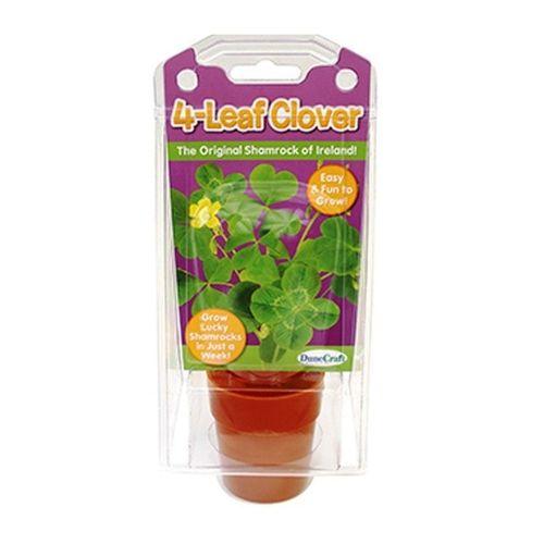 Grow Your Own Lucky Clover