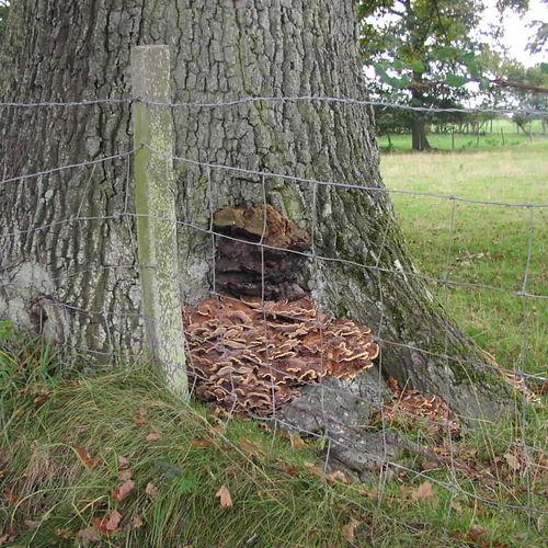 Basic Tree Inspection