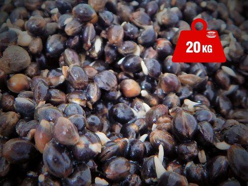 Hemp Seed - 20kg