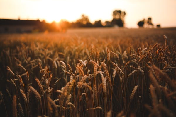 Agricultural Worker Visa is Back