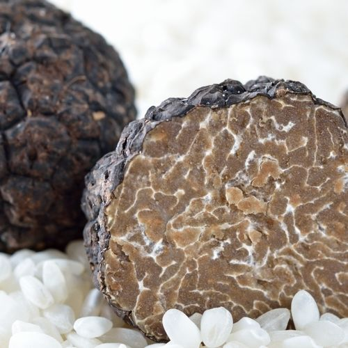 EUROPEAN AUTUMN  BLACK TRUFFLES (tuber uncinatum)