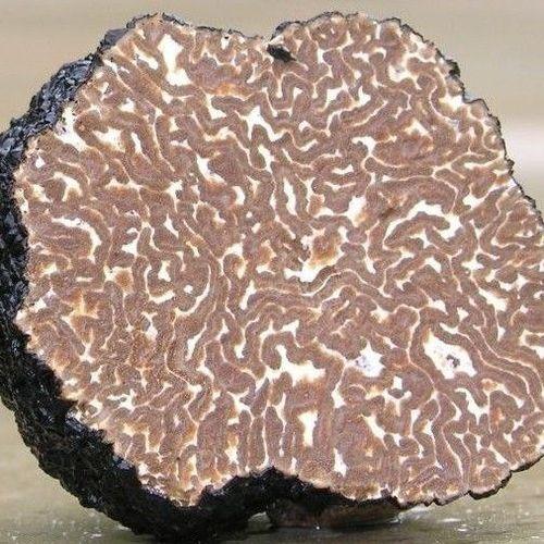 White Truffle (tuber magnatum pico)