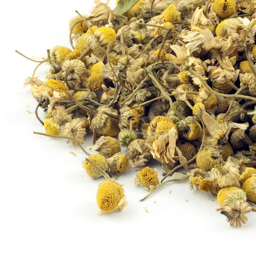 Egyptian Camomile