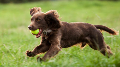 How We Can Help Your Dog
