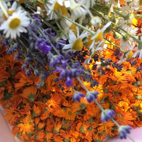 Dorset Flowers Botanical Cleanser