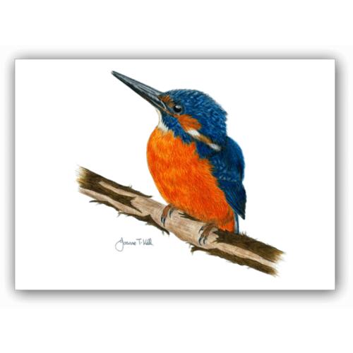 Joanne T Kell Kingfisher Greeting Card