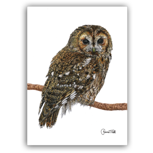 Joanne T Kell Tawny Owl Greeting Card