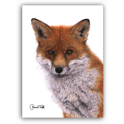 Joanne T Kell Red Fox Greeting Card