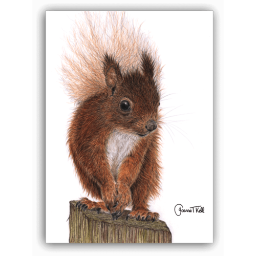 Joanne T Kell Red Squirrel Greeting Card