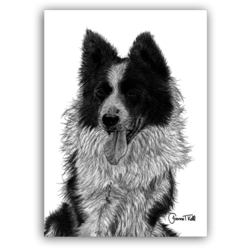 Joanne T Kell Border Collie Close Up Greeting Card