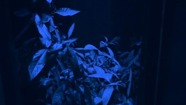 Hicham Berrada: Dreamscapes at the Hayward Gallery Heni Project Space.