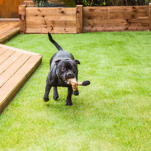 the Best Type of Artificial Grass to Use for Pets