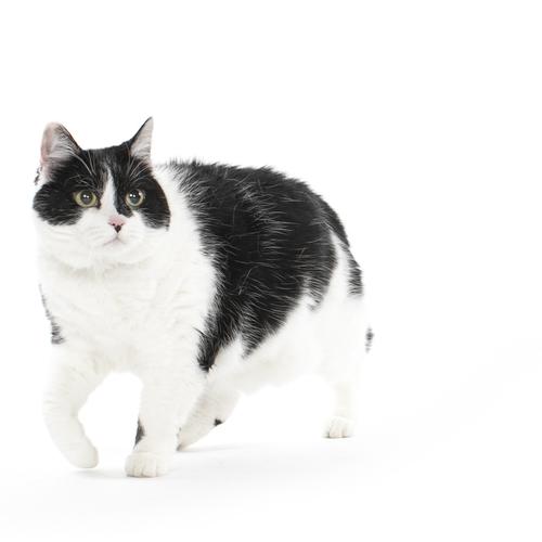 Pet Photoshoot with Prints