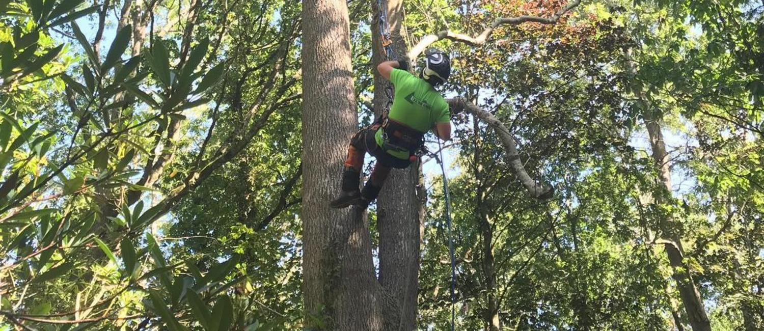 Tree Services Isle of Wight