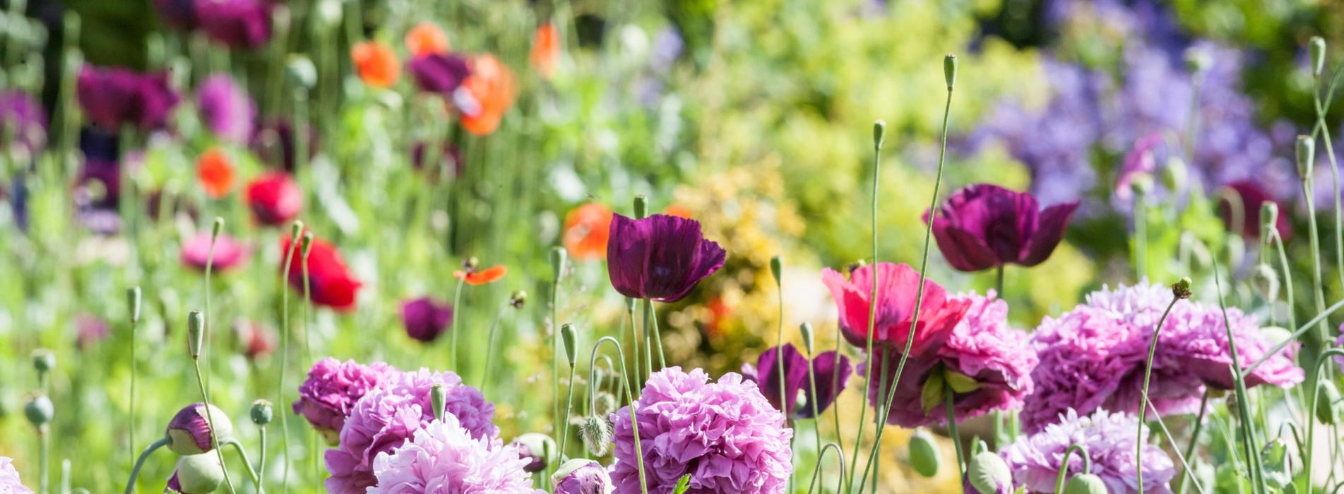 garden maintenance ascot