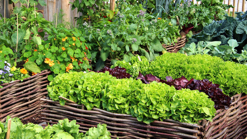 Kitchen gardens & greenhouses