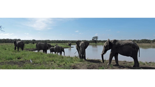 Elephant Dam