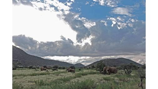 Eles at Samburu