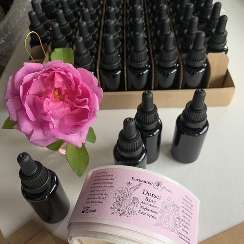 Dorset Rose Antioxidant Night Time Face Serum