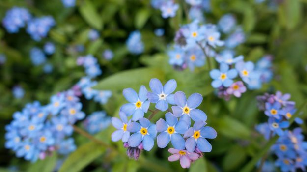 Forget Me Not: Why We Are Programmed To Forget