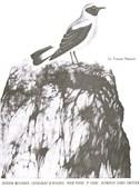 Olivier Messiaen: Catalogue D'Oiseaux - Piano (Volume 2)