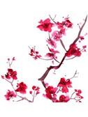 Japanese Folksong: Sakura (Cherry Blossoms)