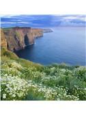 Traditional Irish Folk Song: Lark In The Morning