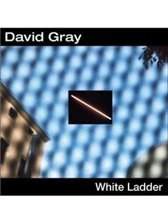 David Gray: This Year's Love Digital Sheet Music   Lyrics & Chords (with Chord Boxes)