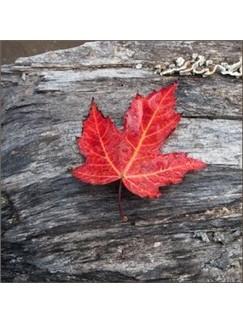 Canadian Folksong: Peggy Gordon Digital Sheet Music | Banjo
