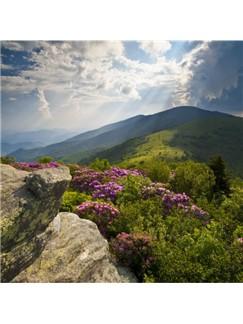 Tom Lough: Appalachian Psalm (arr. Jon Paige) Digital Sheet Music | SATB