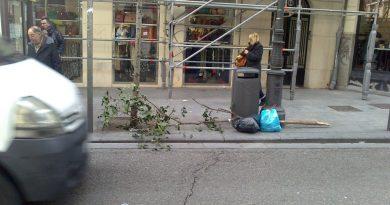 el árbol cortado ya forma parte de la basura social