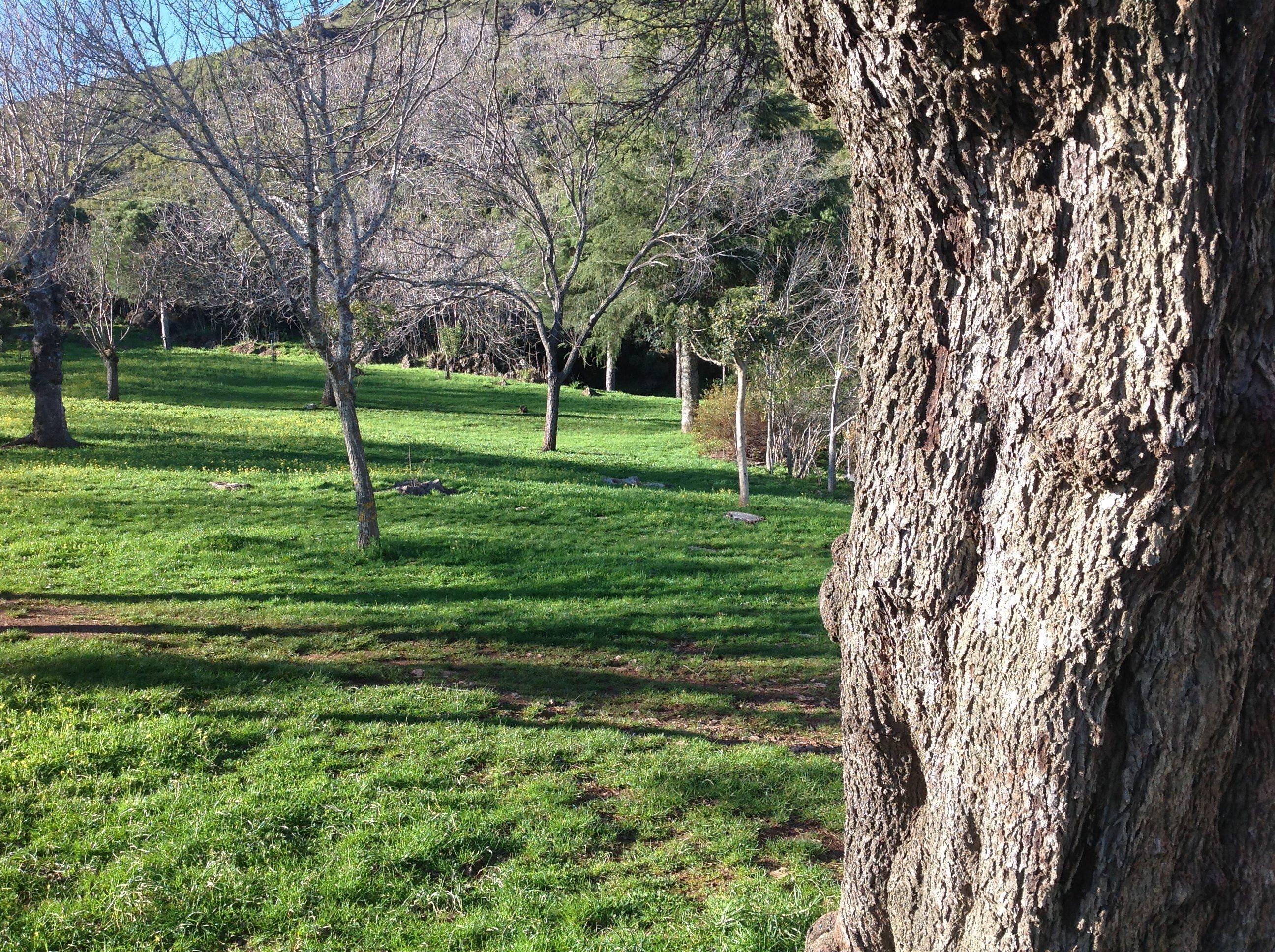 Algunos árboles los plantó el sabio Montano