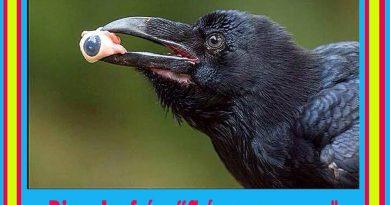dice-el-refrc3a1n-crc3ada-cuervos-y