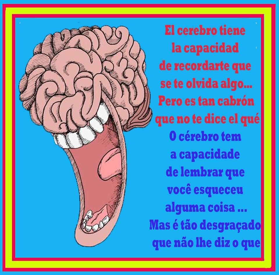 El cerebro y la capacidad de recordar