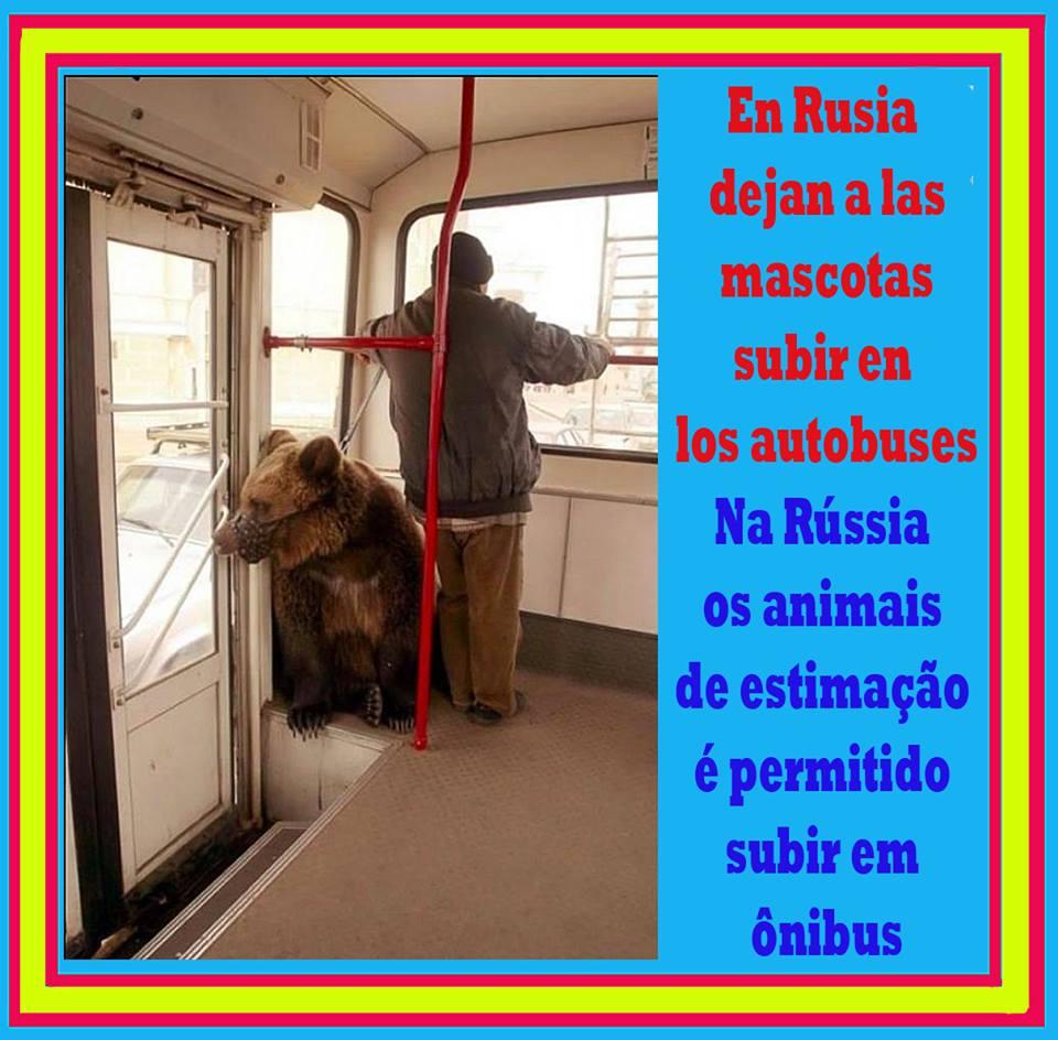 En Rusia dejan a las mascotas subir a los autobuses