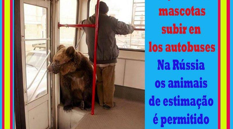 en-rusia-dejan-a-las-mascotas-subir-a-los-autobuses