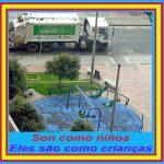 Los envíos desde Brasil del gran Mariano: Son como niños