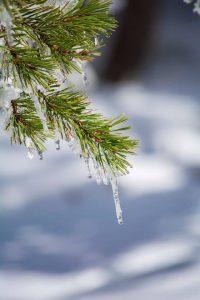 al-volver-la-vista-atras-las-huellas-de-la-nieve-se-derriten-pero-nunca-se-podran-borrar