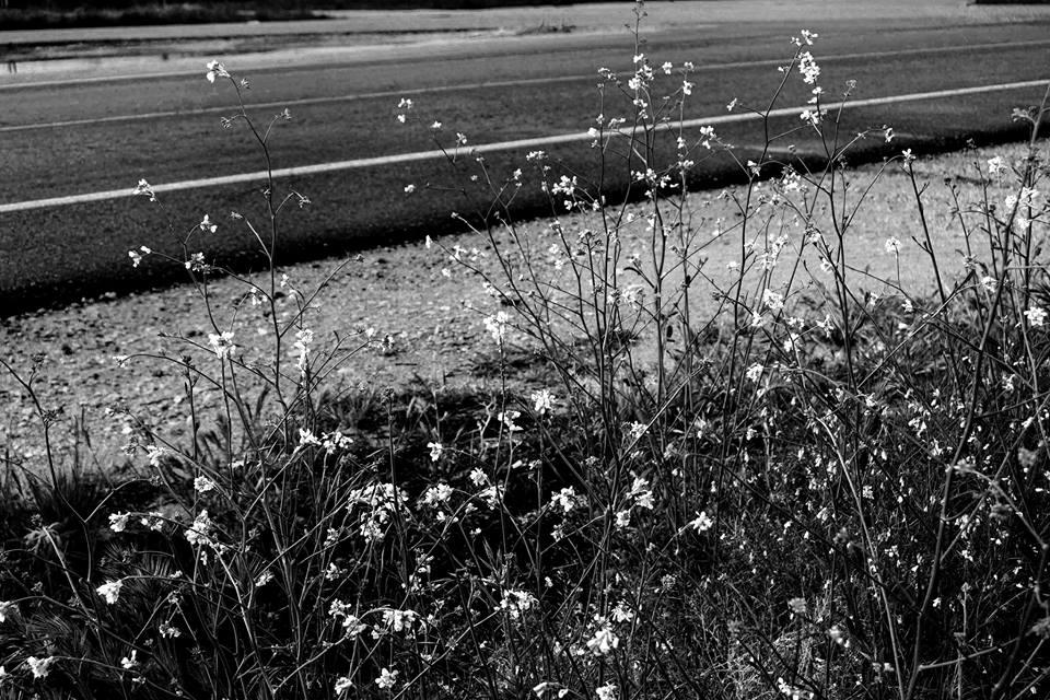 Las flores nacen en las cunetas de los cadávares.