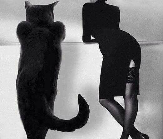 el gato que se lo quede otro