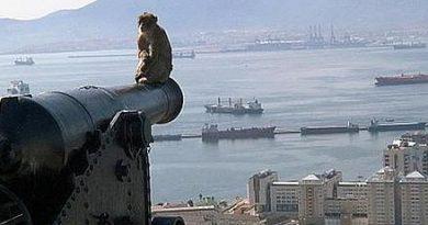 Cañón con mono en Gibraltar. La vergüenza del Sur de España