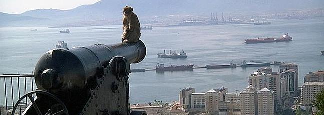 Cañón con mono en Gibraltar