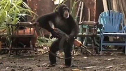 chimpancé con una Ak-47
