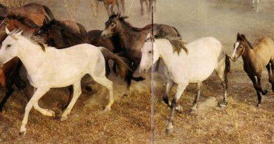 caballos raza española