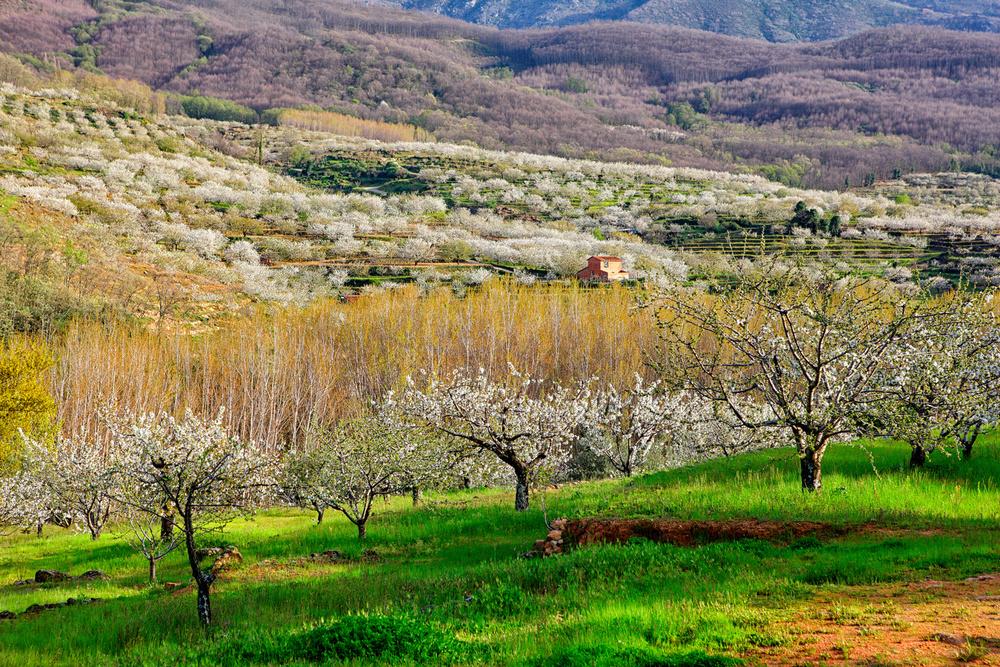 Valle de Jerte (Extremadura)
