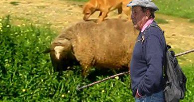 La ovejita lucera es la Cancion adecuada para Pedro Sánchez