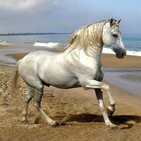 El caballo, los caballeros y la Devotio Iberica