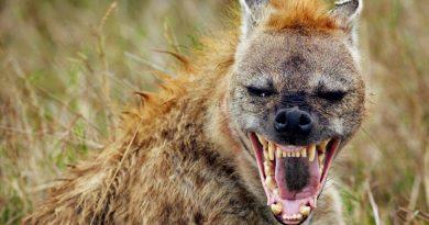 Las hienas y las feminazis