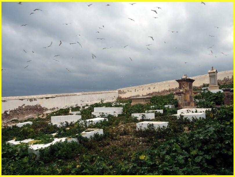 Actualmente, sólo la habitan colonias ingentes de gaviotas